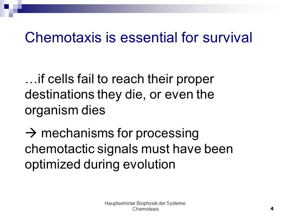 Hauptseminar Biophysik der Systeme: Chemotaxis4 Chemotaxis is essential for survival …if cells fail to reach their proper destinations they die, or even the organism dies  mechanisms for processing chemotactic signals must have been optimized during evolution