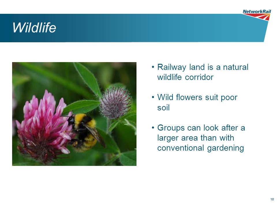 18 Wildlife Railway land is a natural wildlife corridor Wild flowers suit poor soil Groups can look after a larger area than with conventional gardening