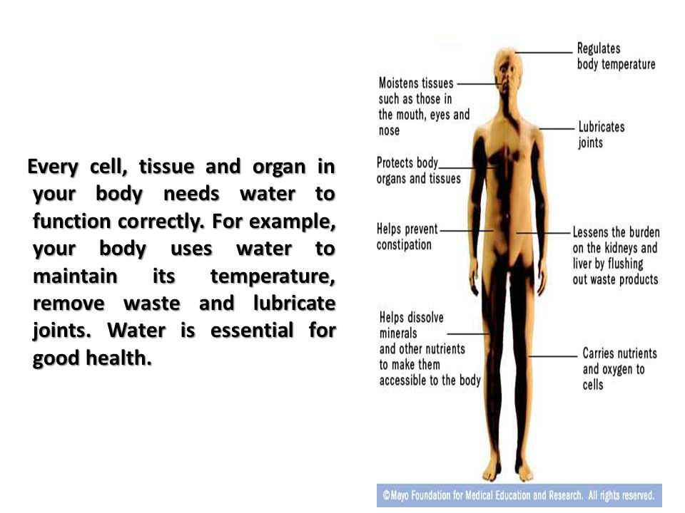 Every cell, tissue and organ in your body needs water to function correctly.