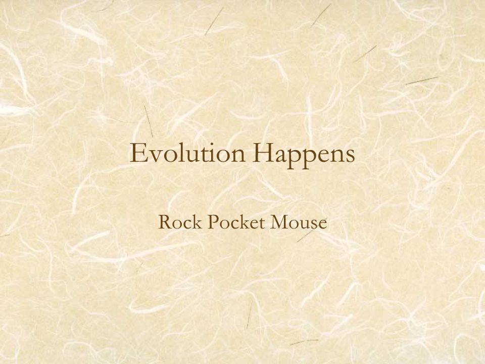 Evolution Happens Rock Pocket Mouse