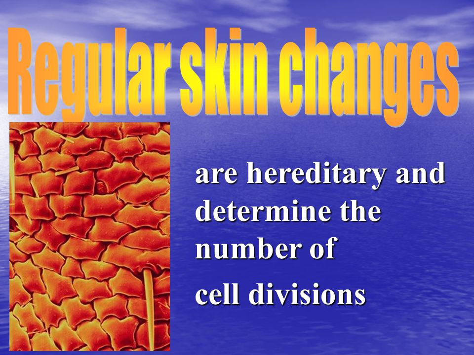 are hereditary and determine the number of cell divisions