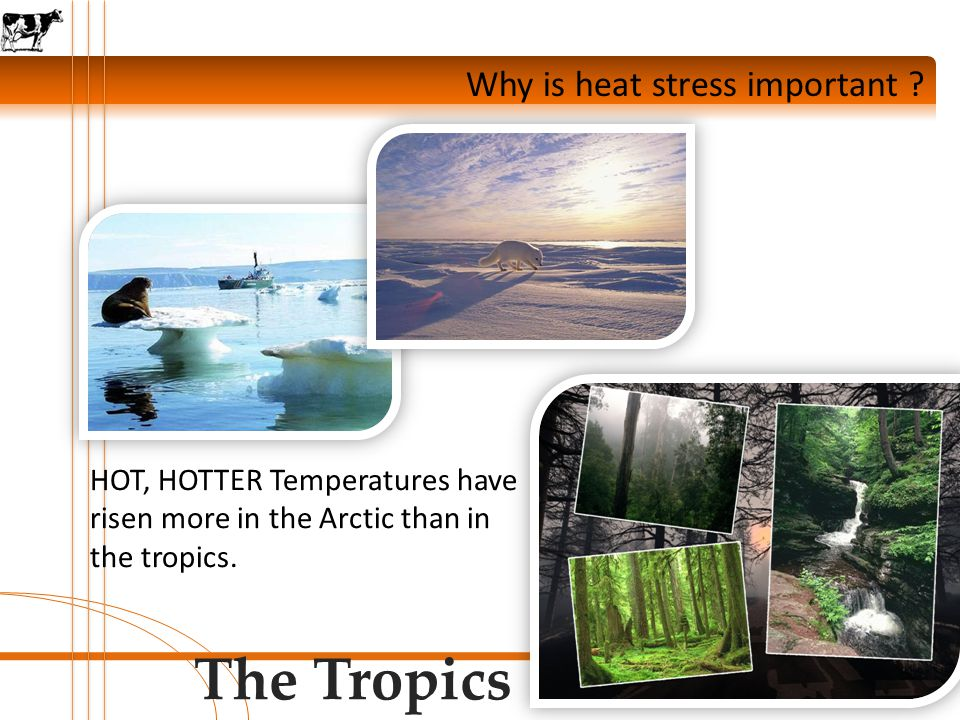 Why is heat stress important .