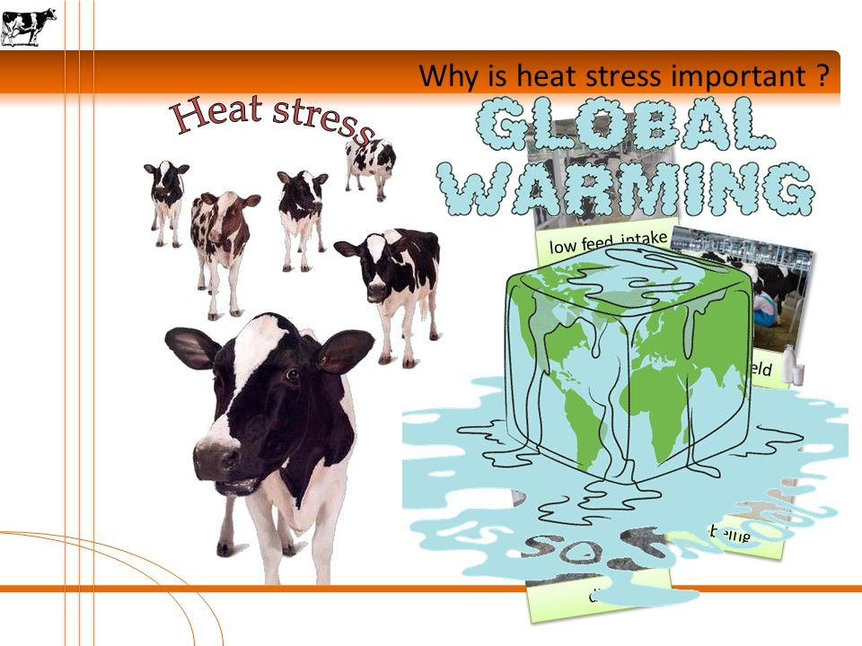 Why is heat stress important ? well-being low fertility die low feed intake low milk yield