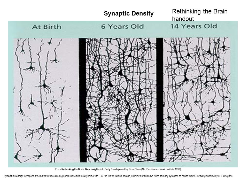 Synaptic Density From Rethinking the Brain: New Insights into Early Development by Rima Shore (NY: Families and Work Institute, 1997) Synaptic Density: Synapses are created with astonishing speed in the first three years of life.