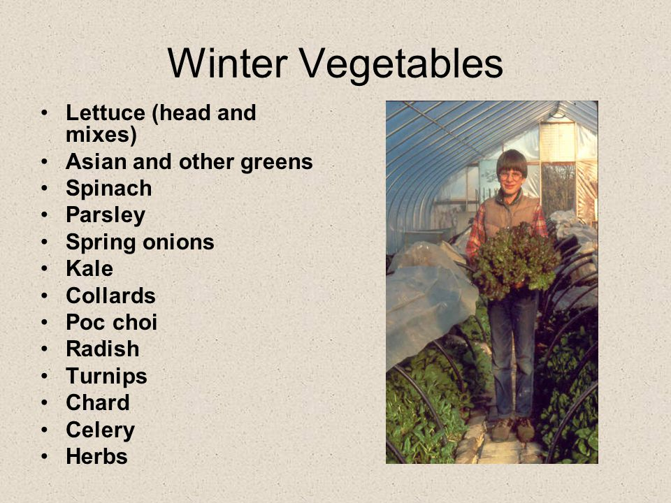 Winter Vegetables Lettuce (head and mixes) Asian and other greens Spinach Parsley Spring onions Kale Collards Poc choi Radish Turnips Chard Celery Her