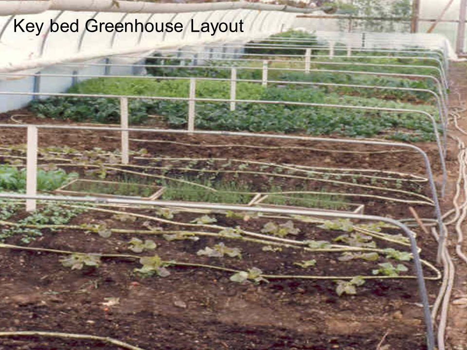 Key bed Greenhouse Layout