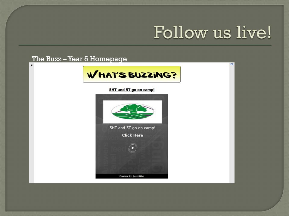 The Buzz – Year 5 Homepage