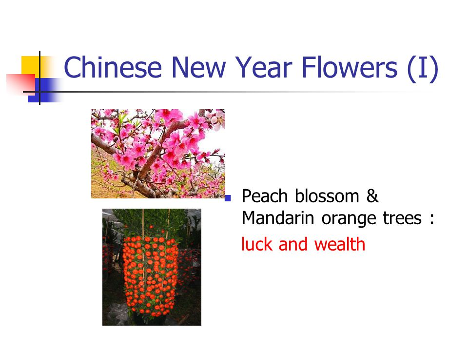 Chinese New Year Flowers (I) Peach blossom & Mandarin orange trees : luck and wealth