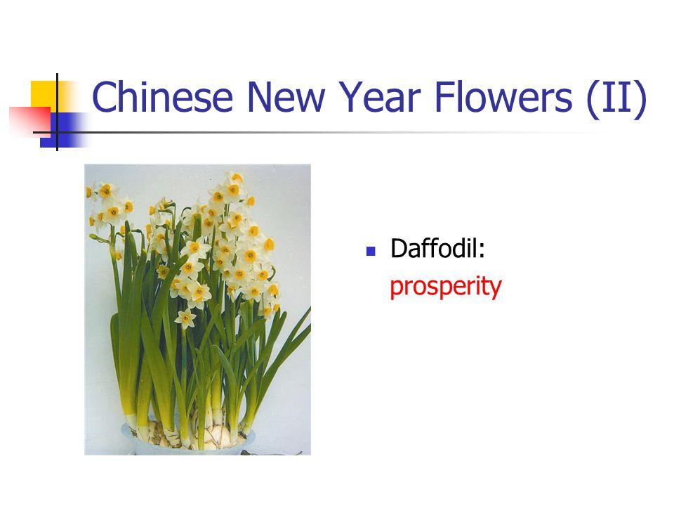 Chinese New Year Flowers (II) Daffodil: prosperity