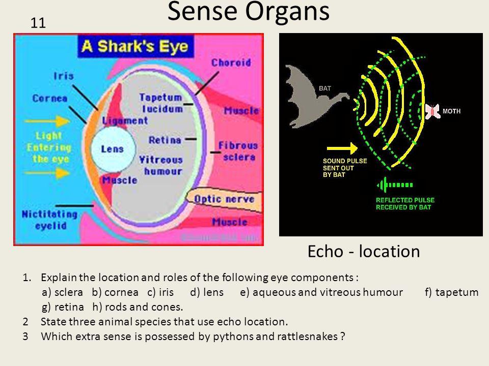 Sense Organs Echo - location 11 1.Explain the location and roles of the following eye components : a) sclera b) cornea c) iris d) lens e) aqueous and