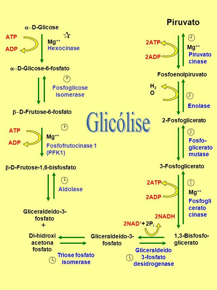  D-Glicose  D-Glicose-6-fosfato  D-Frutose-6-fosfato ATP ADP Mg ++ Fosfofrutocinase 1 (PFK1) Fosfoglicose isomerase ATP ADP Mg ++  -D-Frutose-1