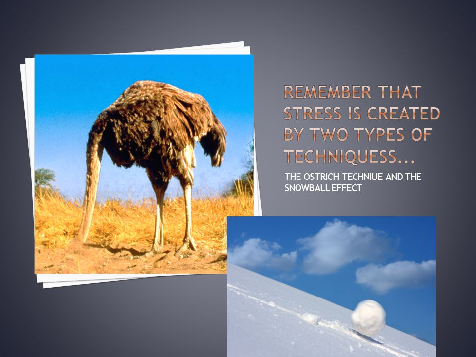 THE OSTRICH TECHNIUE AND THE SNOWBALL EFFECT