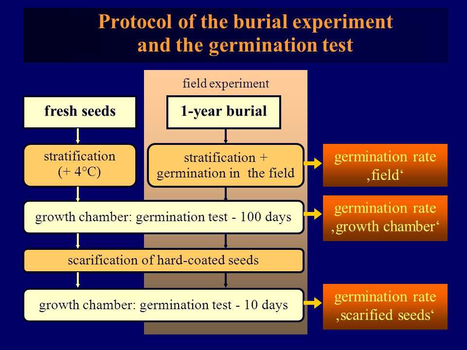 field experiment 1-year burial Protocol of the burial experiment and the germination test fresh seeds growth chamber: germination test - 10 days scarification of hard-coated seeds germination rate 'scarified seeds' germination rate 'growth chamber' growth chamber: germination test - 100 days stratification (+ 4°C) stratification + germination in the field germination rate 'field'