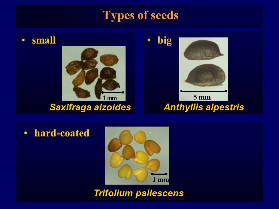 Types of seeds small Saxifraga aizoides big Anthyllis alpestris Trifolium pallescens hard-coated