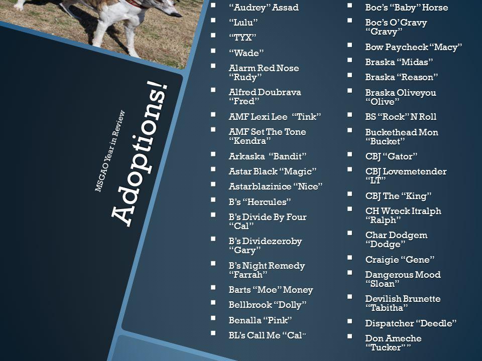 """Adoptions!  Blueandgrey """"Grey""""  Boc's """"Baby"""" Horse  Boc's O'Gravy """"Gravy""""  Bow Paycheck """"Macy""""  Braska """"Midas""""  Braska """"Reason""""  Braska Oliveyo"""