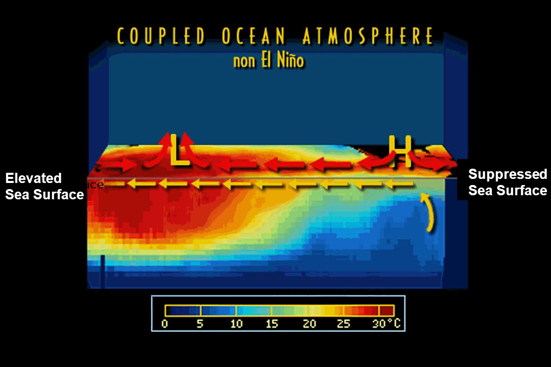 Suppressed Sea Surface Elevated Sea Surface
