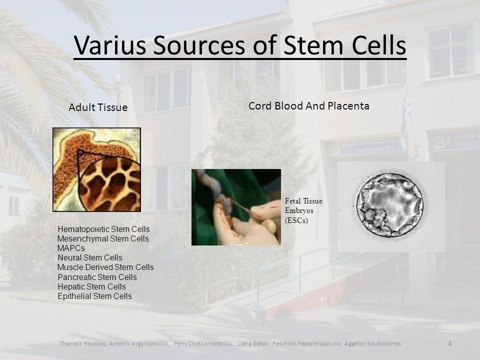Varius Sources of Stem Cells Thanasis Roussos, Antonis Argyropoulos,, Peny Chatzianastasiou, Liana Bakali, Paschalis Papanelopoulos, Aggelos Koutsodimas 4 Adult Tissue Hematopoietic Stem Cells Mesenchymal Stem Cells MAPCs Neural Stem Cells Muscle Derived Stem Cells Pancreatic Stem Cells Hepatic Stem Cells Epithelial Stem Cells Cord Blood And Placenta Fetal Tissue Embryos (ESCs)