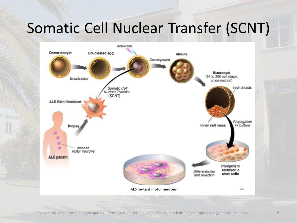 Somatic Cell Nuclear Transfer (SCNT) Thanasis Roussos, Antonis Argyropoulos,, Peny Chatzianastasiou, Liana Bakali, Paschalis Papanelopoulos, Aggelos Koutsodimas 6 ALS mutant motor neurons