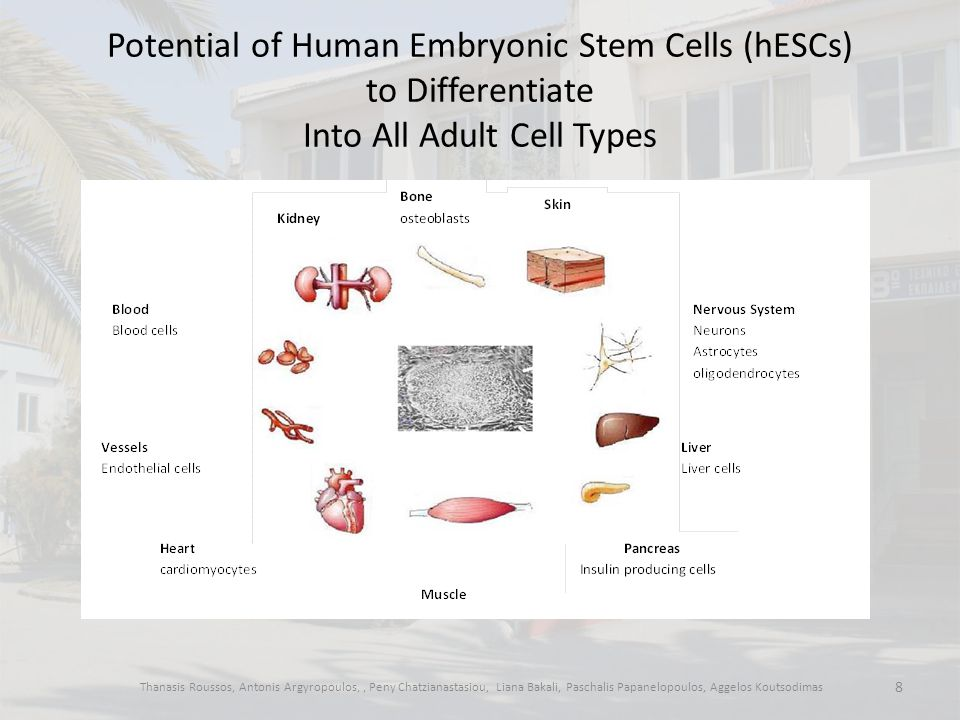 What does human cloning have to do with embryonic stem cell research.