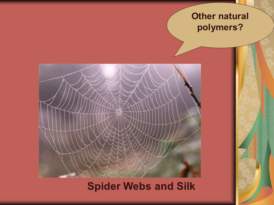 Spider Webs and Silk