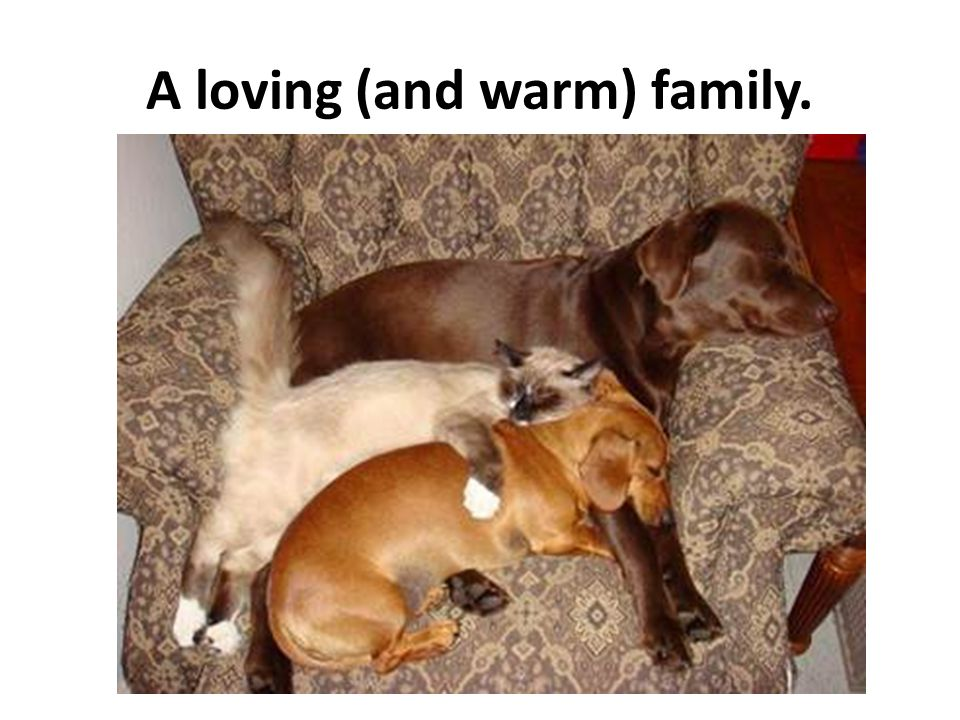 A loving (and warm) family.