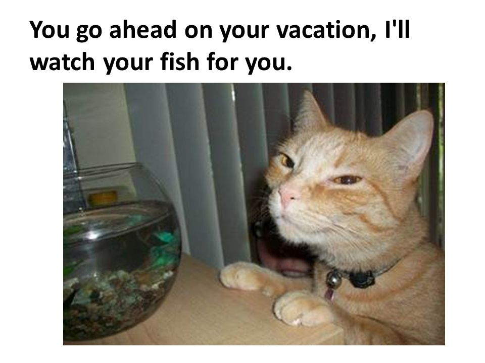 You go ahead on your vacation, I ll watch your fish for you.