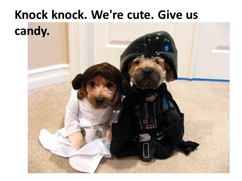 Knock knock. We re cute. Give us candy.