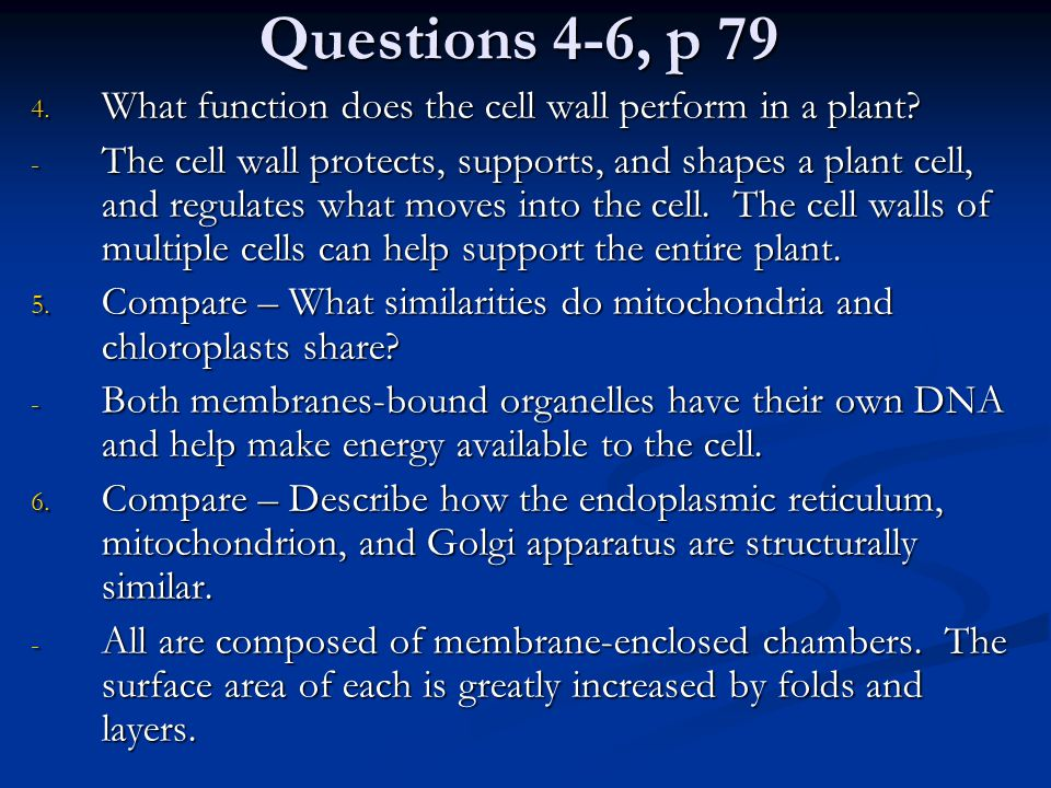 Questions 4-6, p 79 4. What function does the cell wall perform in a plant? - The cell wall protects, supports, and shapes a plant cell, and regulates
