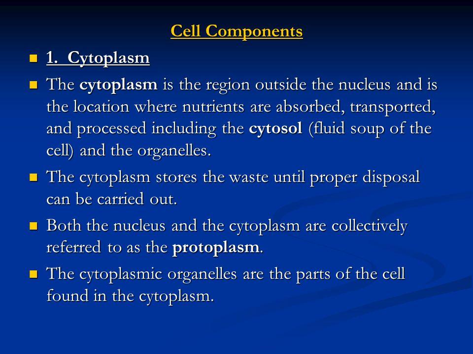 2.Plasma Membrane (Cell membrane) 2.