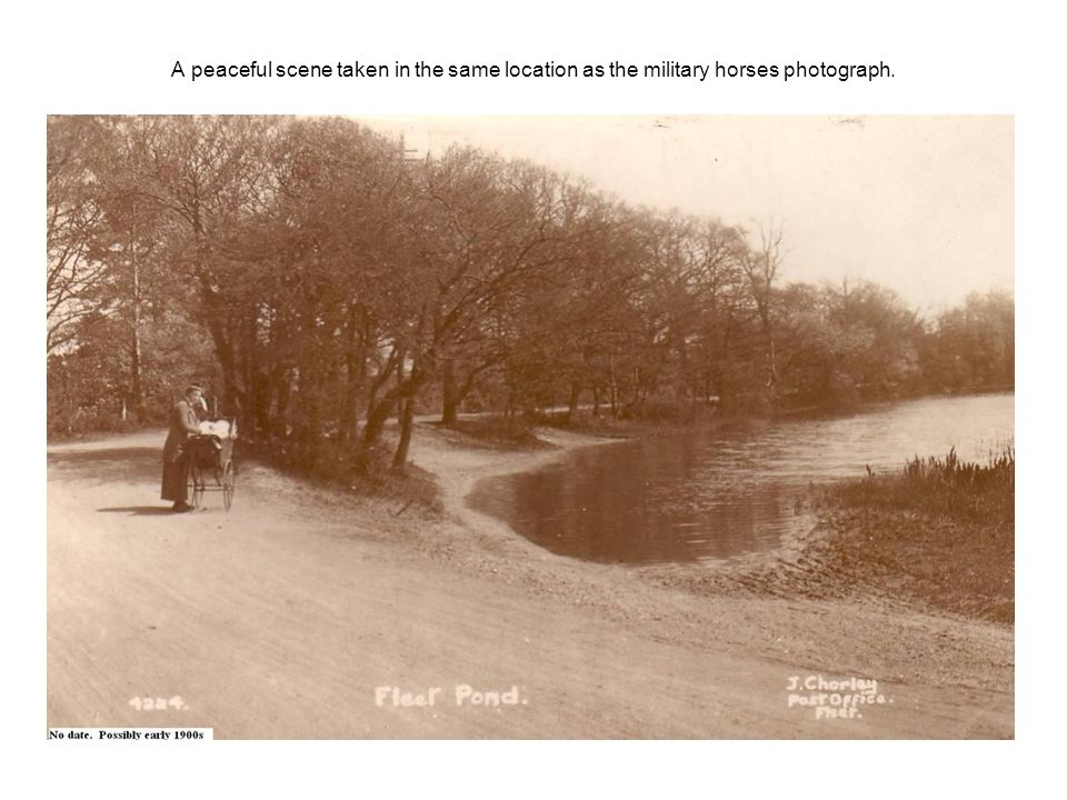 A peaceful scene taken in the same location as the military horses photograph.
