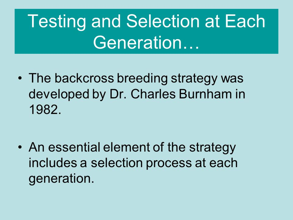 Testing and Selection at Each Generation… When the seedlings from each generation reach about 5 years of age, they are inoculated with a known strain of the blight and their reactions are observed.