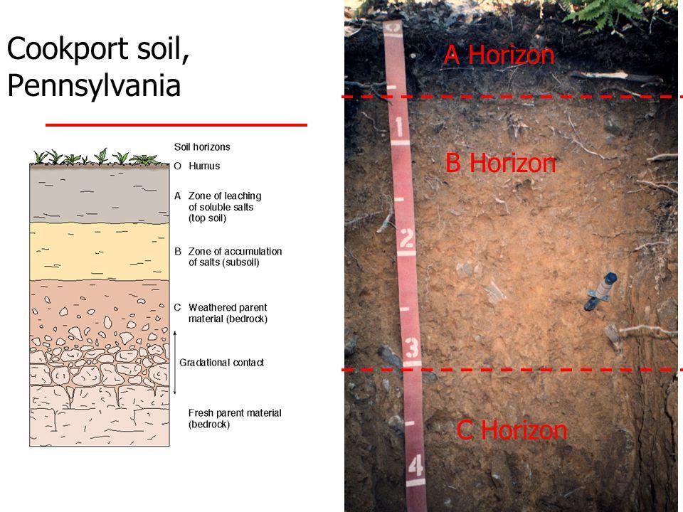 Cookport soil, Pennsylvania C Horizon B Horizon A Horizon