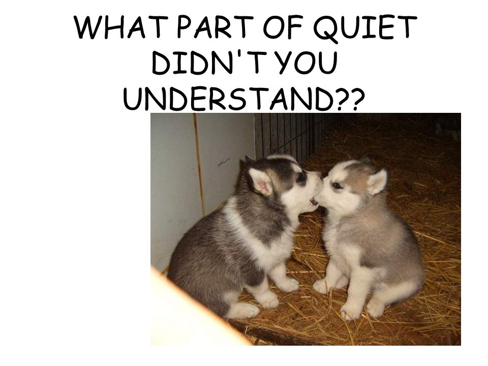 WHAT PART OF QUIET DIDN'T YOU UNDERSTAND??