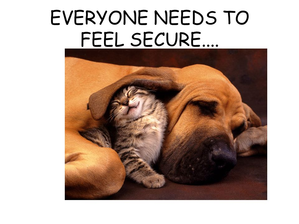 EVERYONE NEEDS TO FEEL SECURE....