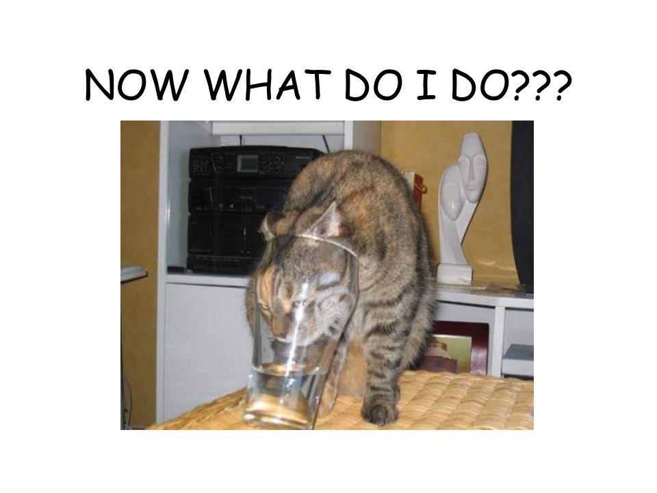 NOW WHAT DO I DO???