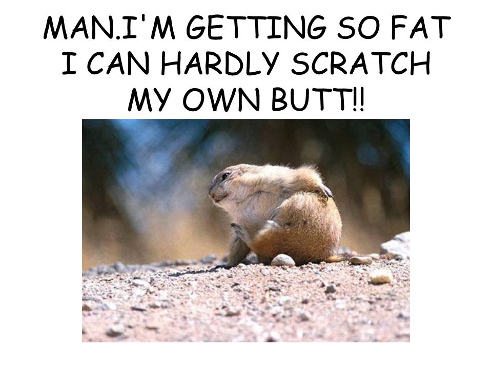MAN.I'M GETTING SO FAT I CAN HARDLY SCRATCH MY OWN BUTT!!