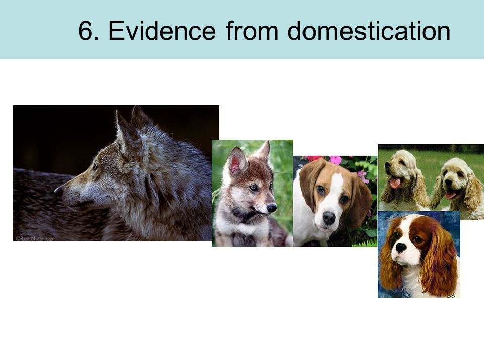 6. Evidence from domestication