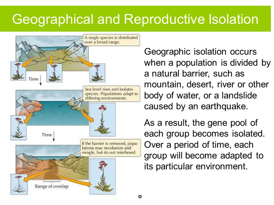 Geographic isolation occurs when a population is divided by a natural barrier, such as mountain, desert, river or other body of water, or a landslide
