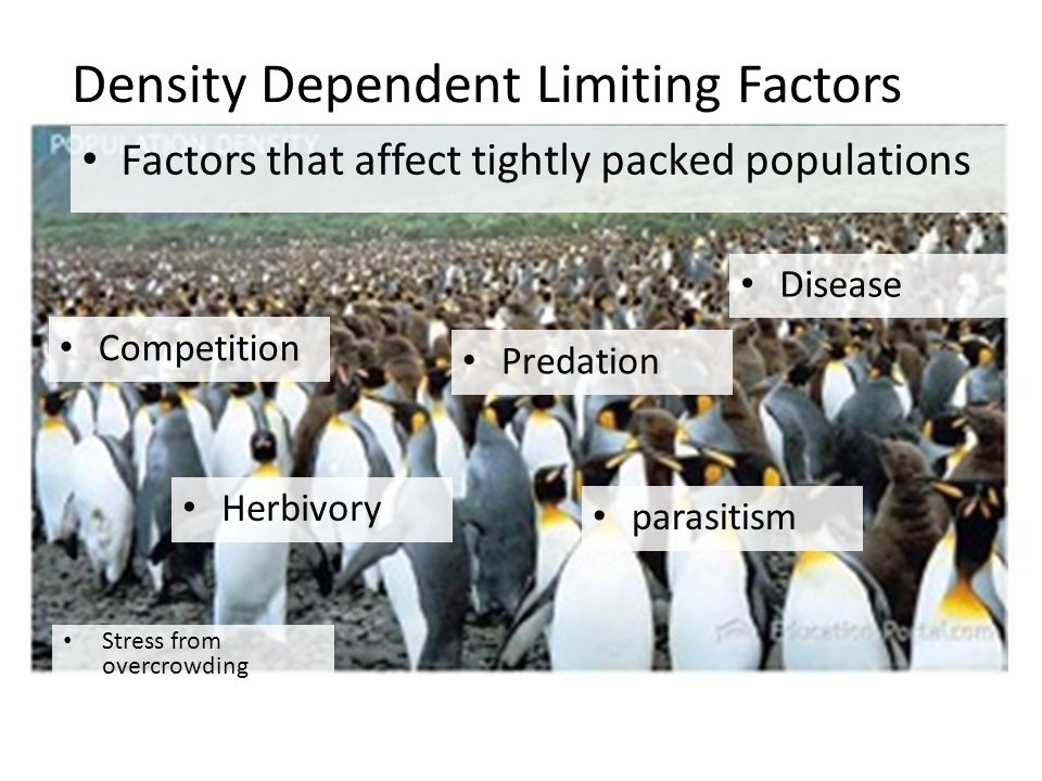 Density Dependent Limiting Factors Factors that affect tightly packed populations Competition Predation Herbivory parasitism Disease Stress from overcrowding