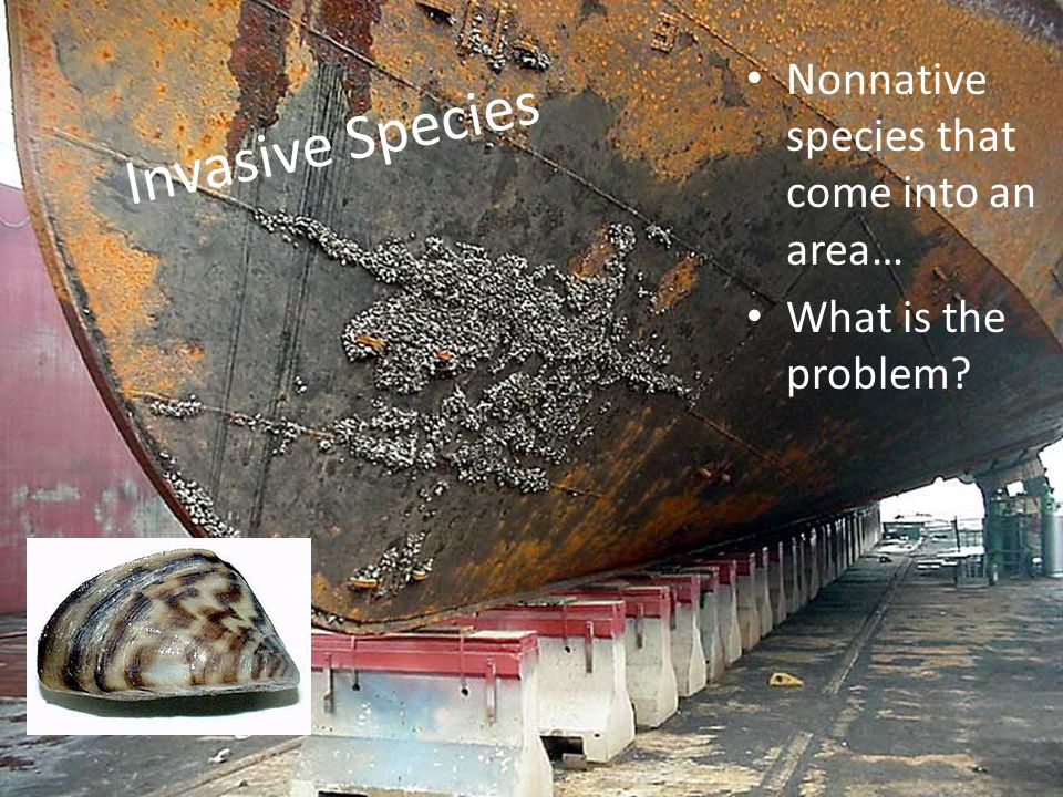 Invasive Species Nonnative species that come into an area… What is the problem?