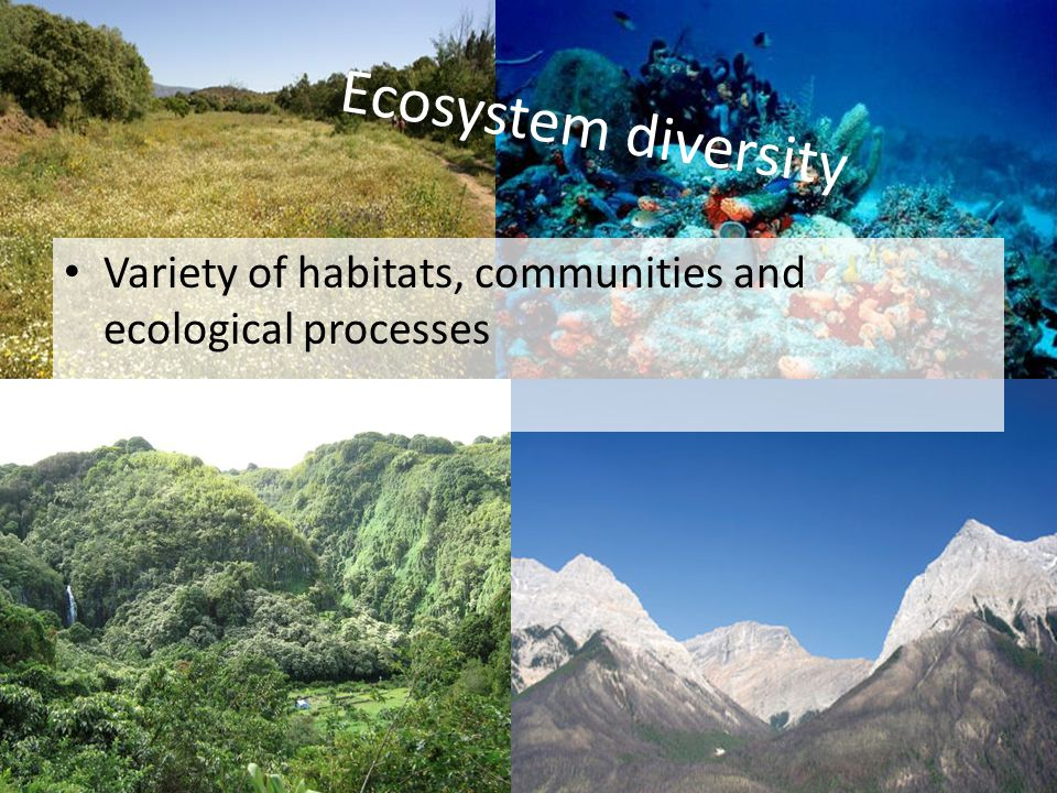 Ecosystem diversity Variety of habitats, communities and ecological processes