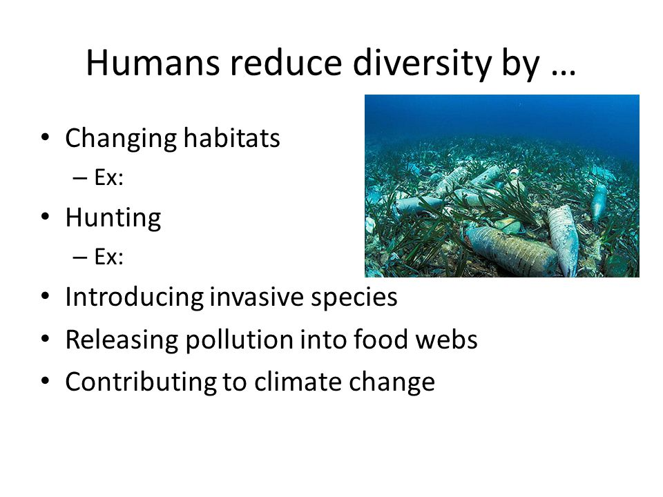 Humans reduce diversity by … Changing habitats – Ex: Hunting – Ex: Introducing invasive species Releasing pollution into food webs Contributing to climate change