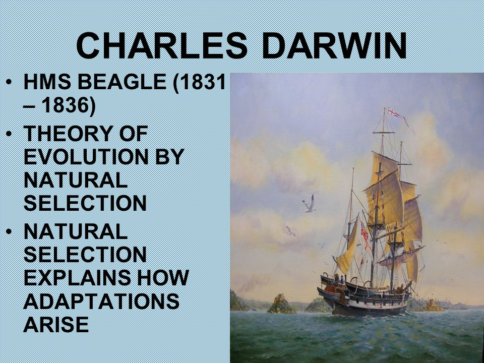 CHARLES DARWIN HMS BEAGLE (1831 – 1836) THEORY OF EVOLUTION BY NATURAL SELECTION NATURAL SELECTION EXPLAINS HOW ADAPTATIONS ARISE