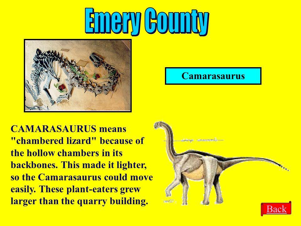 Camarasaurus CAMARASAURUS means
