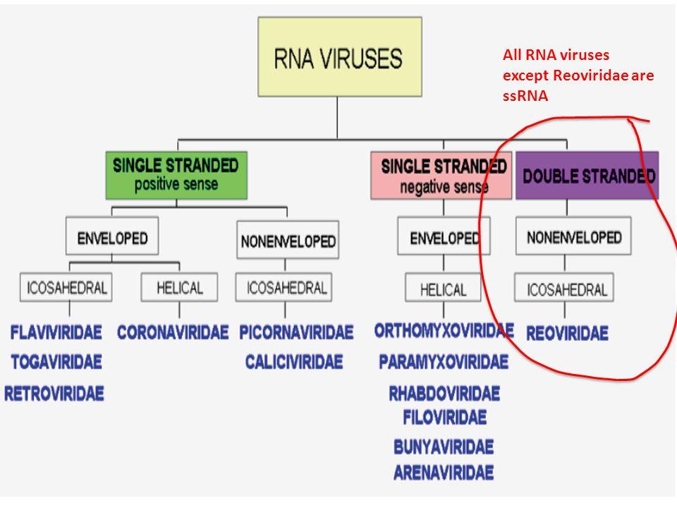 All RNA viruses except Reoviridae are ssRNA