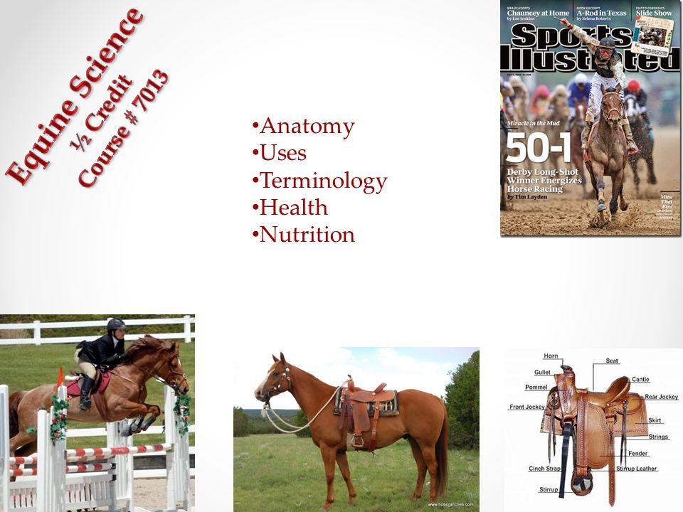 Anatomy Uses Terminology Health Nutrition