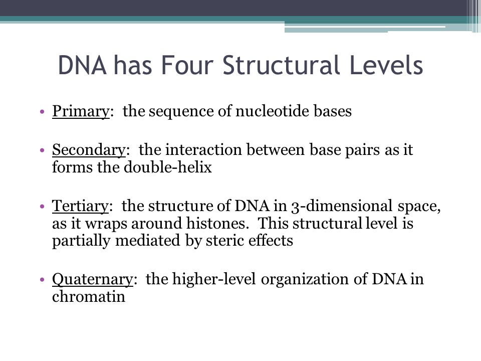DNA has Four Structural Levels Primary: the sequence of nucleotide bases Secondary: the interaction between base pairs as it forms the double-helix Tertiary: the structure of DNA in 3-dimensional space, as it wraps around histones.