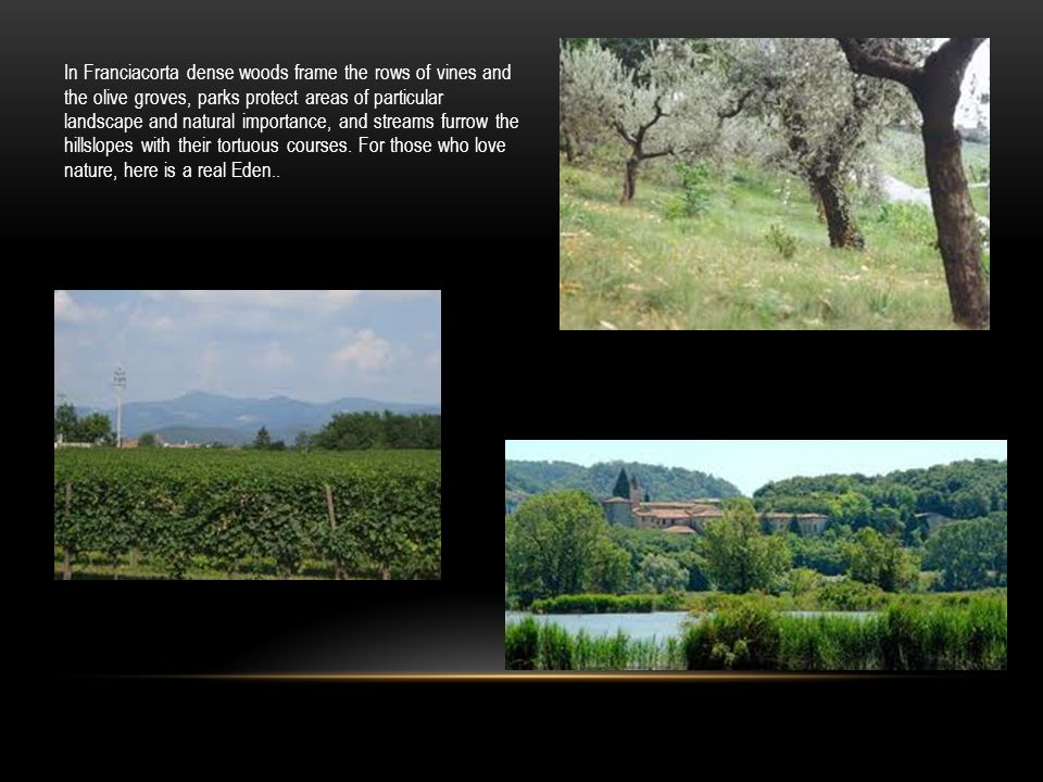 In Franciacorta dense woods frame the rows of vines and the olive groves, parks protect areas of particular landscape and natural importance, and streams furrow the hillslopes with their tortuous courses.