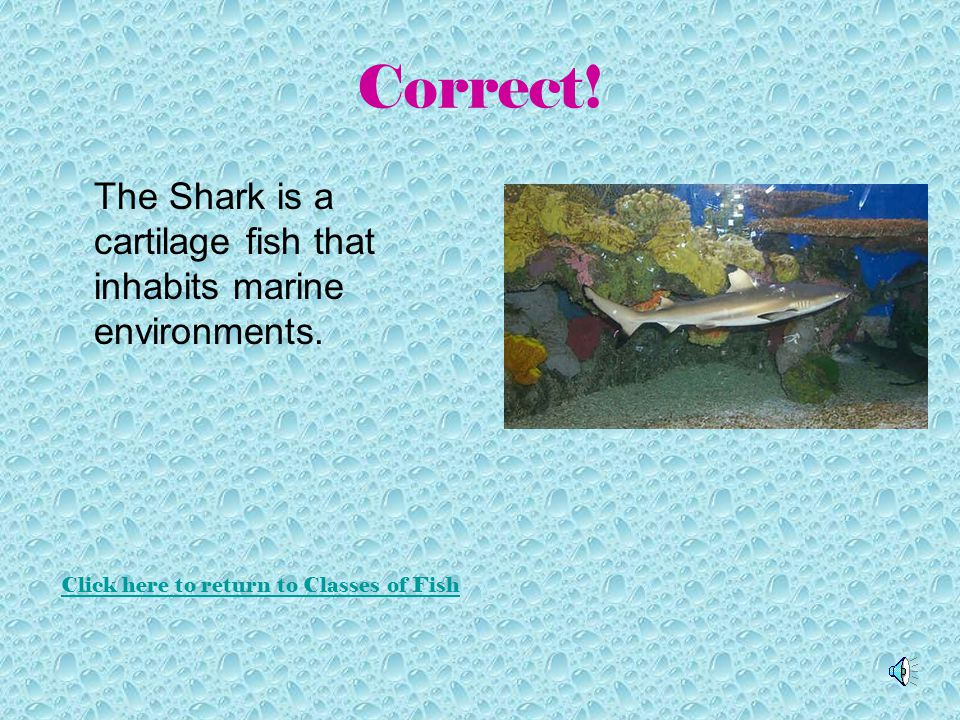 Which of the Following is a Cartilage Fish Click on a picture to see if you are correct!