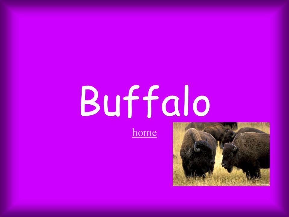 Buffalo home home